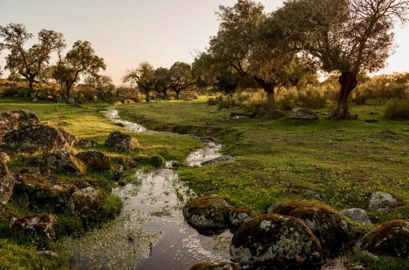 finca con rio con buena arboleda cercana a caceres
