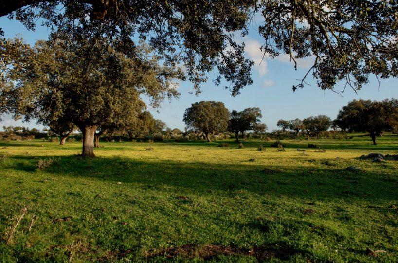 finca de 16 hectáreas cercana a caceres a muy buen precio