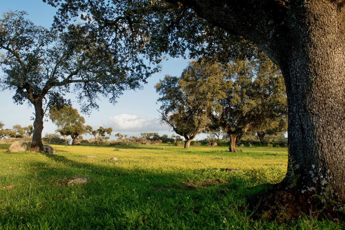 finca con encinar y rio a buen precio con 16 hectáreas